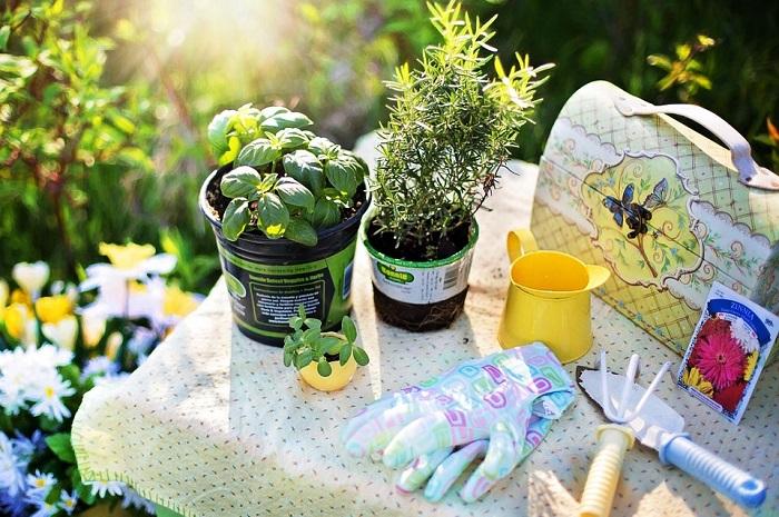planting-780736_960_720.jpg