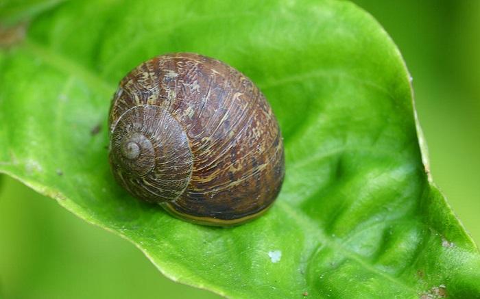 garden-snails.jpg