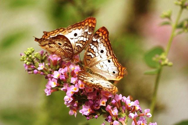 butterfly-743549_640.jpg