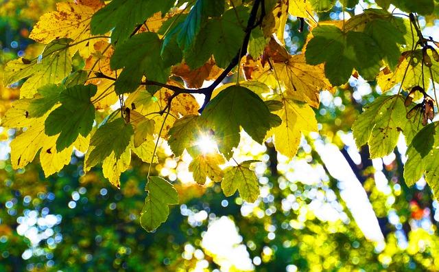 autumn-2870822_640.jpg