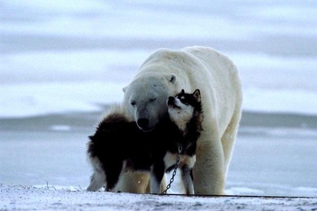 polar-bear-dogs-1.jpg