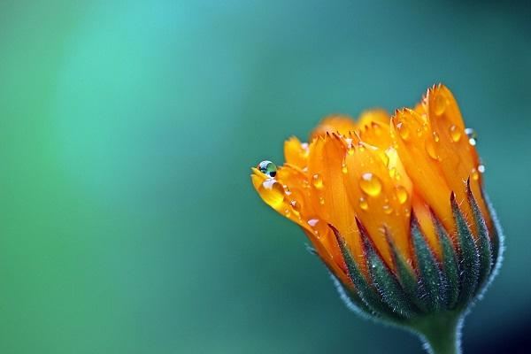 цветок, развитие, план природы
