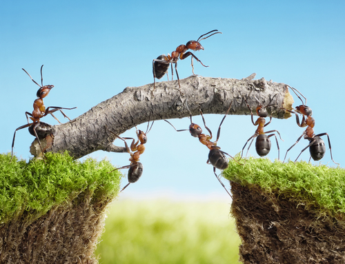 Ants-working-together.jpg