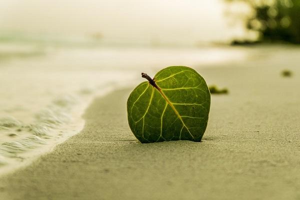 beach-394503_960_720.jpg