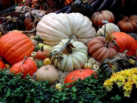 тыквы, осень, деревня