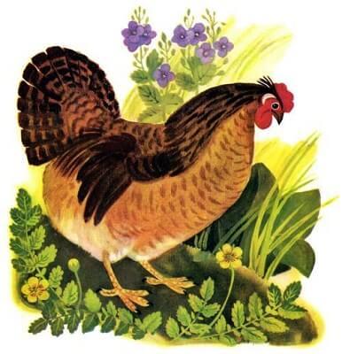 мама-курица, забота о цыпленке